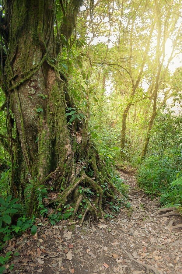 Traînez dans la jungle du volcan Merapi photo libre de droits