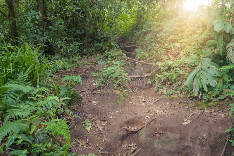 Traînez dans la jungle du volcan Merapi photographie stock libre de droits