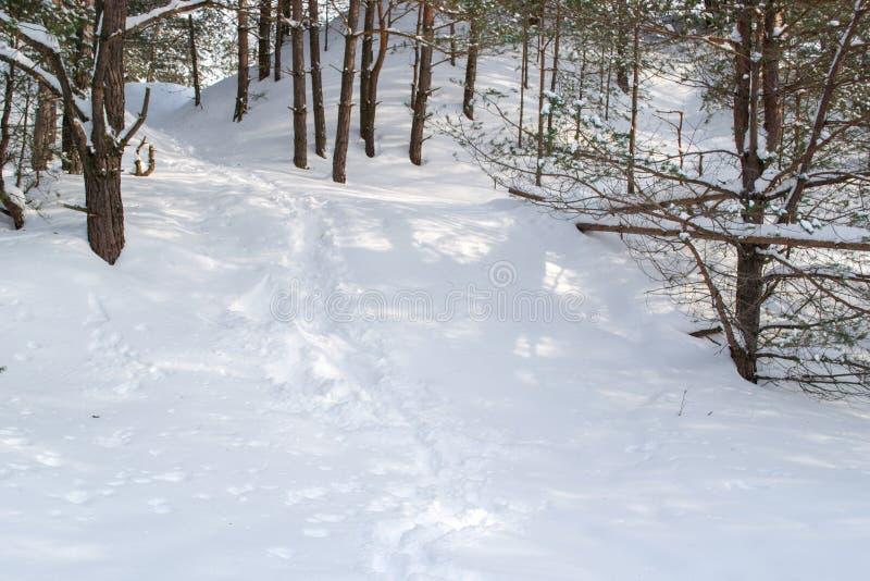 Traînez dans la neige blanche et douce dans la forêt d'hiver image libre de droits
