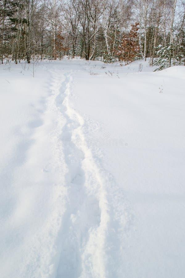 Traînez dans la neige blanche et douce dans la forêt d'hiver photos stock