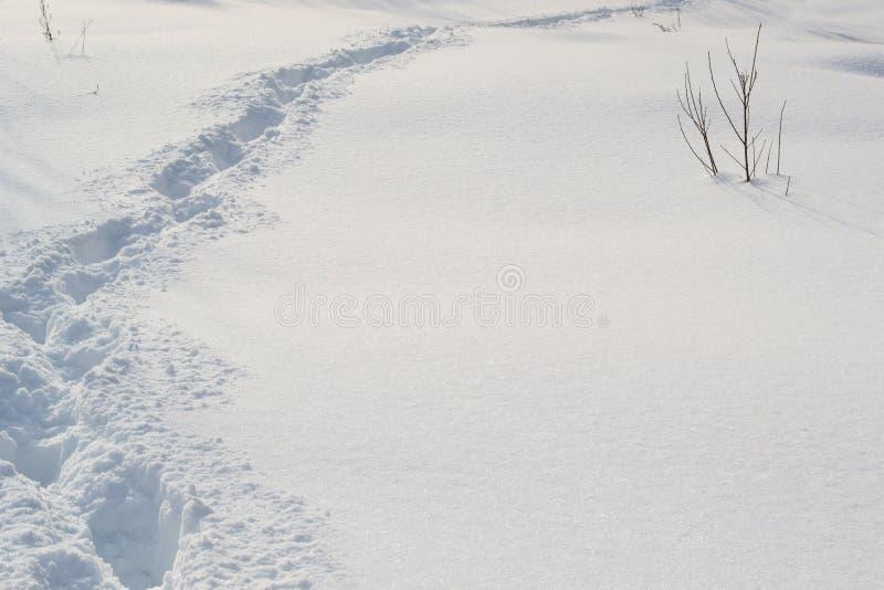 Traînez dans la neige blanche et douce dans la forêt d'hiver images libres de droits
