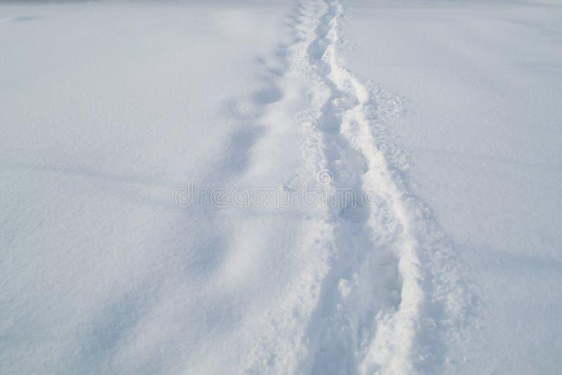 Traînez dans la neige blanche et douce dans la forêt d'hiver photos libres de droits