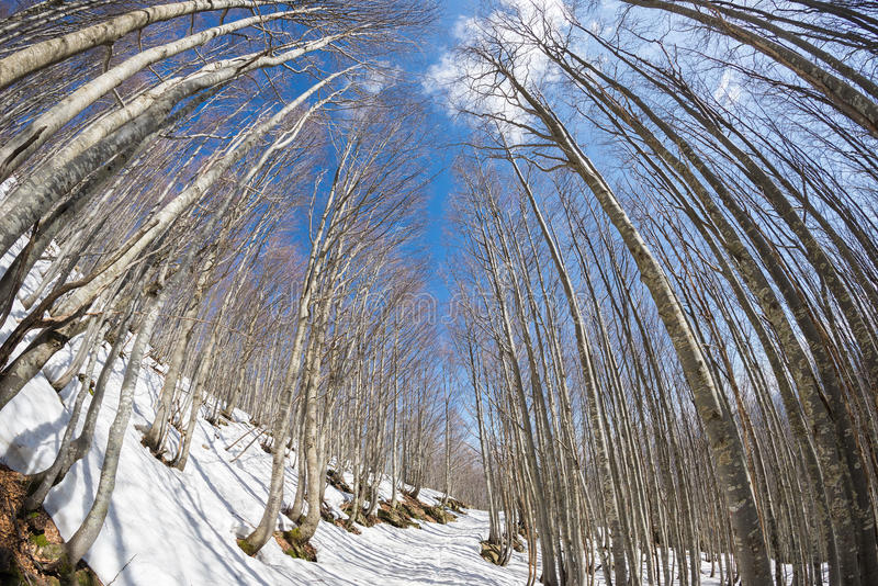 Traînez dans la région boisée d'arbre de hêtre avec la neige, fisheye image stock