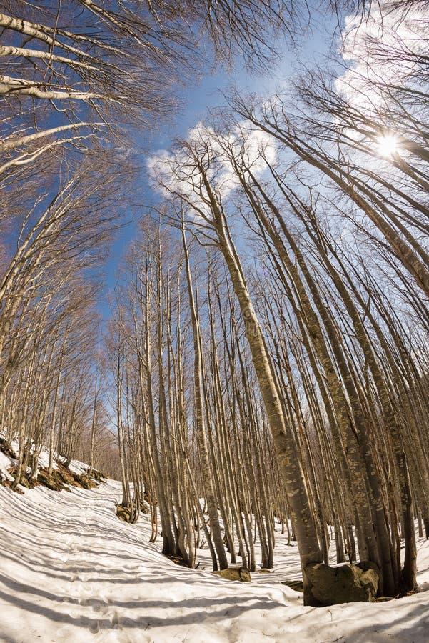 Traînez dans la région boisée d'arbre de hêtre avec la neige, fisheye images stock