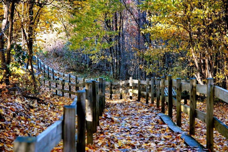 Traînez dans le bois photographie stock libre de droits