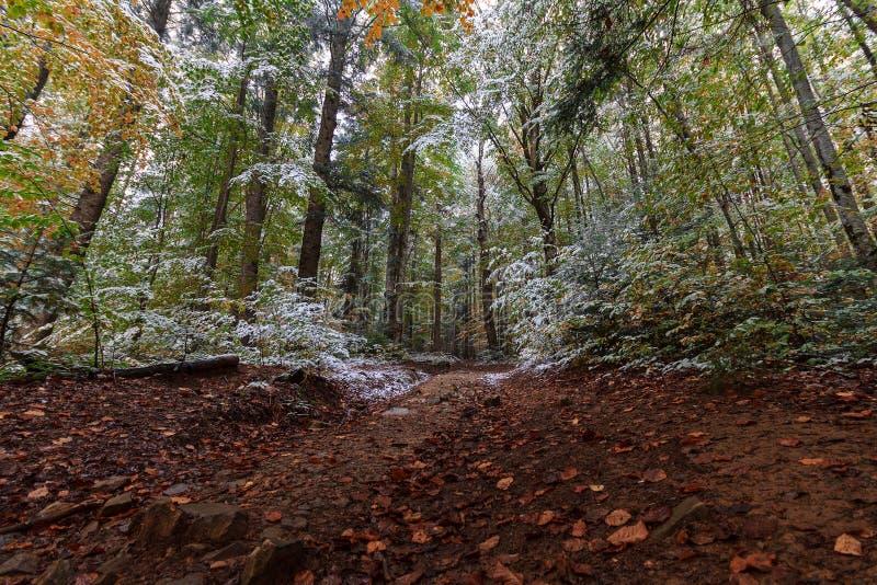 Traînez dans les bois d'automne couverts de neige photos stock