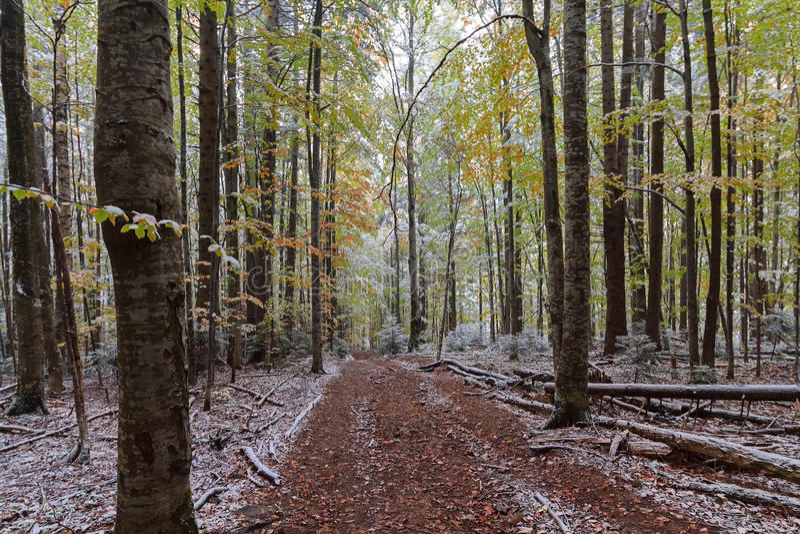 Traînez dans les bois d'automne couverts de neige image stock