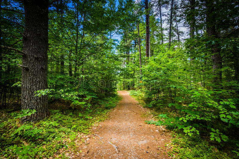 Traînez dans une forêt au parc d'état de ruisseau d'ours, New Hampshire image libre de droits