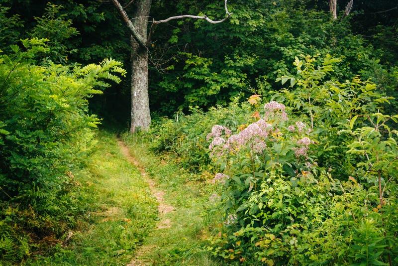 Traînez dans une forêt, en parc national de Shenandoah, la Virginie images stock