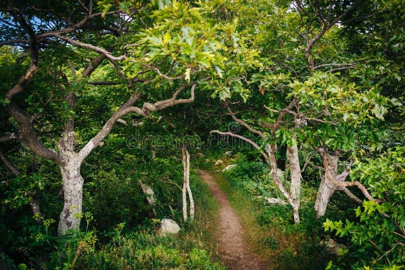 Traînez dans une forêt en parc national de Shenandoah, la Virginie images stock