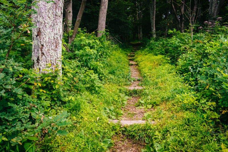 Traînez dans une forêt, en parc national de Shenandoah, la Virginie photo libre de droits