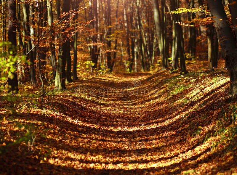 Traînez en bois d'automne couverts de feuilles jaunes dans la lumière de coucher du soleil image stock