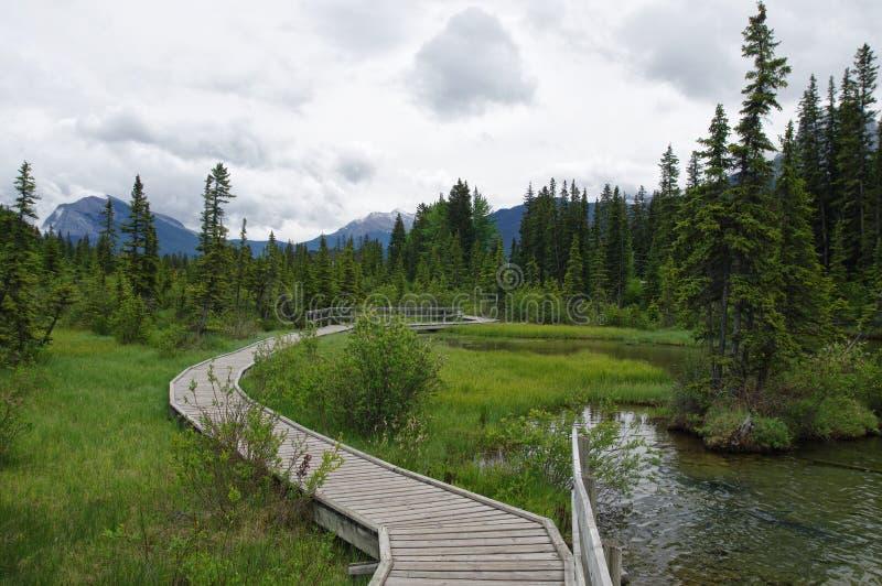 Traînez en parc dans Canmore, Alberta, Canada photos stock