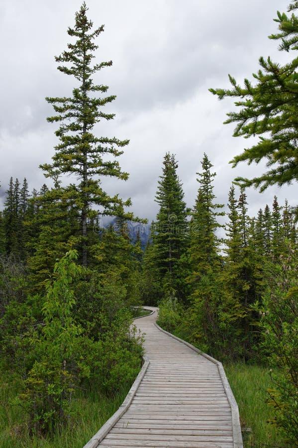 Traînez en parc dans Canmore, Alberta, Canada photo libre de droits
