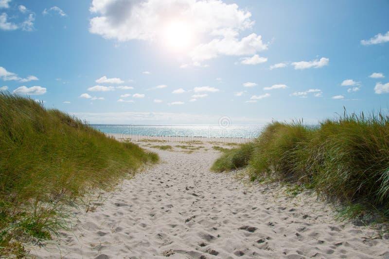 Traînez entre les dunes couvertes par herbe pour vider la plage de sable le jour ensoleillé image stock