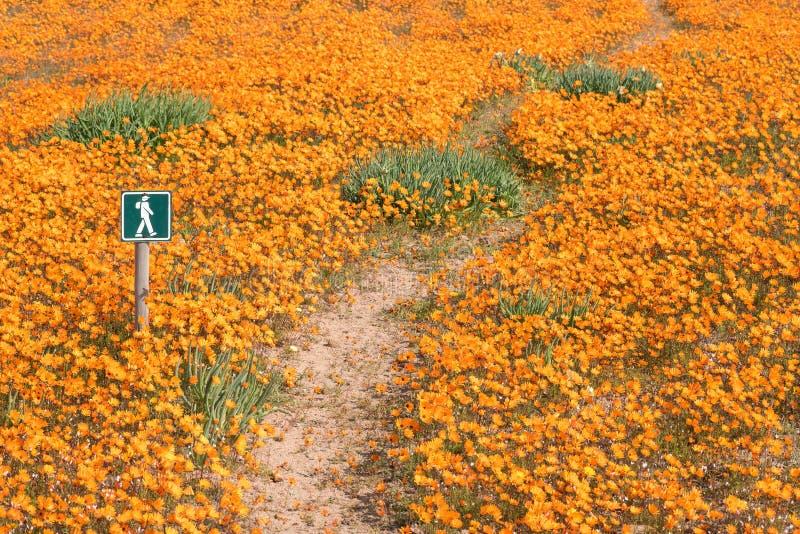 Traînez entre un tapis des fleurs chez Skilpad photo libre de droits