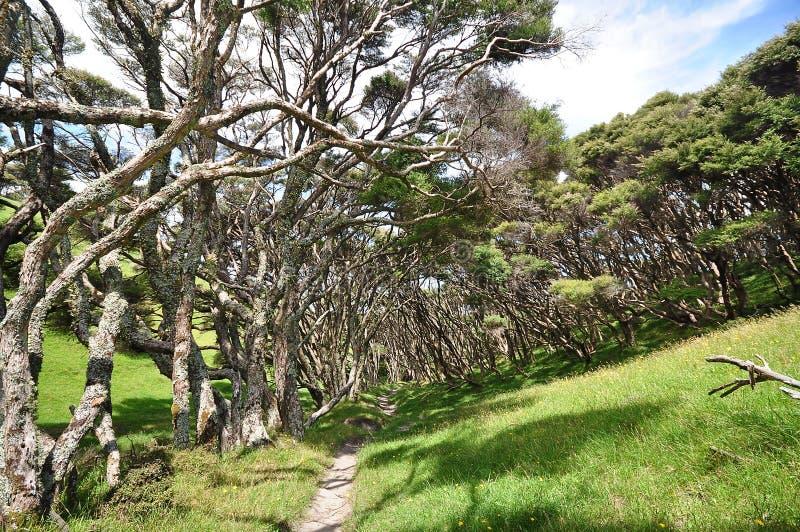 Traînez la forêt côtière balayée par le vent allante de cuvette image stock