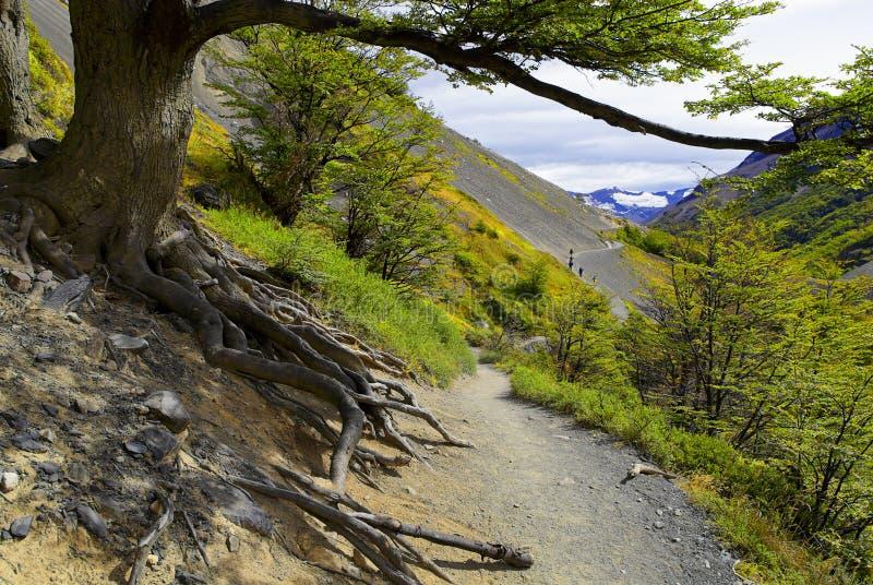 Traînez le long du flanc de montagne en Torres del Paine, Patagonia du Chili photos stock