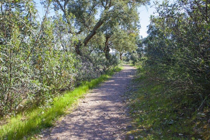 Traînez le passer le long de la forêt de Cork Oaks au parc naturel de Cornalvo, Spai photos libres de droits