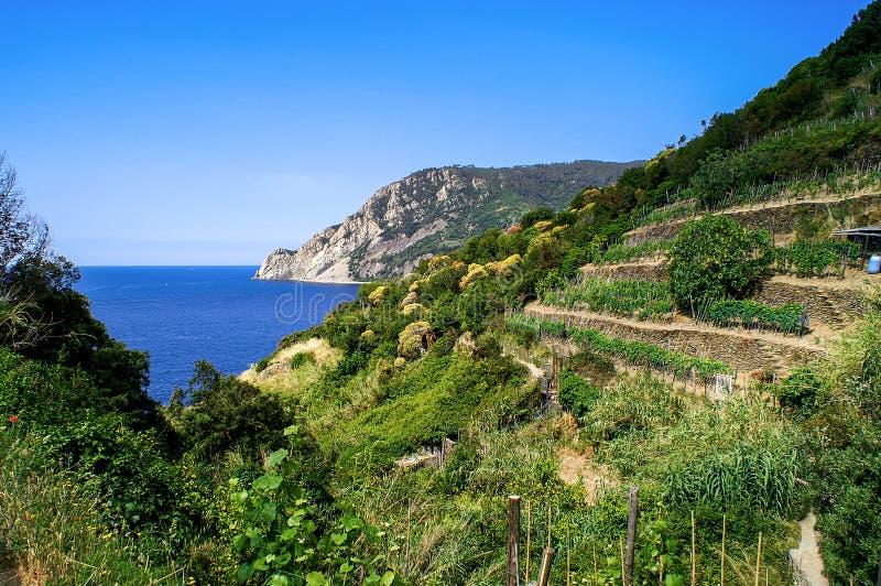 Traînez les vignobles et la mer de négligence dans Cinque Terre photographie stock