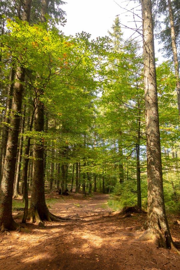 Traînez par la forêt dans le lac noir, réservation naturelle de jezero de Crno, Slovénie images libres de droits