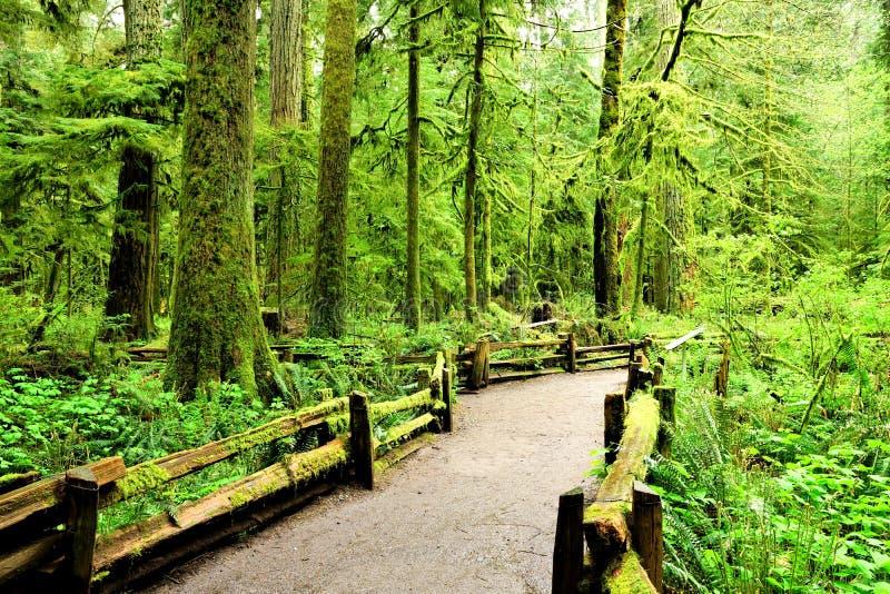 Traînez par la forêt de peuplement vieux, île de Vancouver, AVANT JÉSUS CHRIST photo stock