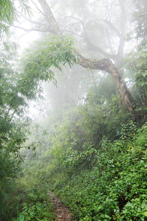 Traînez par la jungle humide dans les montagnes photo stock