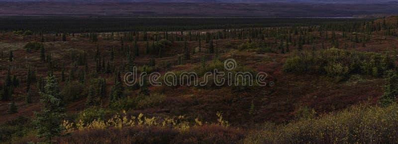 Traînez par le paysage de toundra, saison d'automne de l'Alaska image stock
