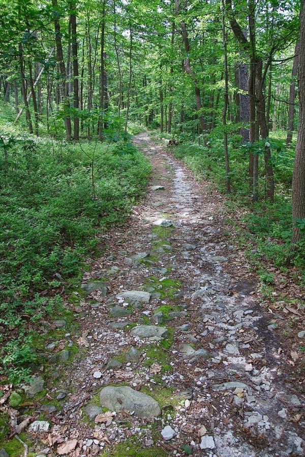 Traînez par les bois en montagnes de la Pennsylvanie images libres de droits