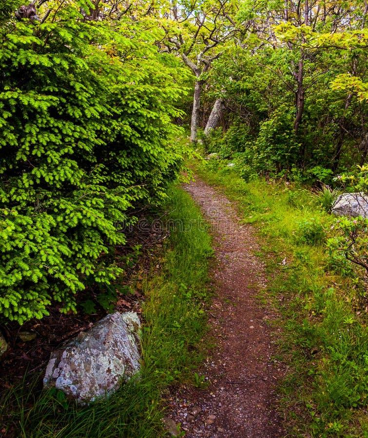 Traînez par une forêt en parc national de Shenandoah photographie stock