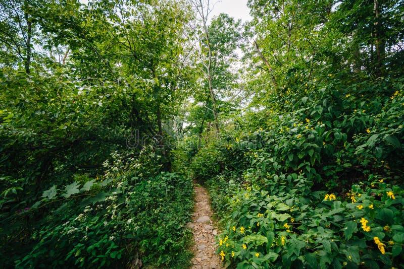 Traînez par une forêt, en parc national de Shenandoah, la Virginie photographie stock