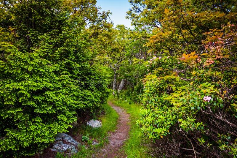 Traînez par une forêt en parc national de Shenandoah, la Virginie images stock