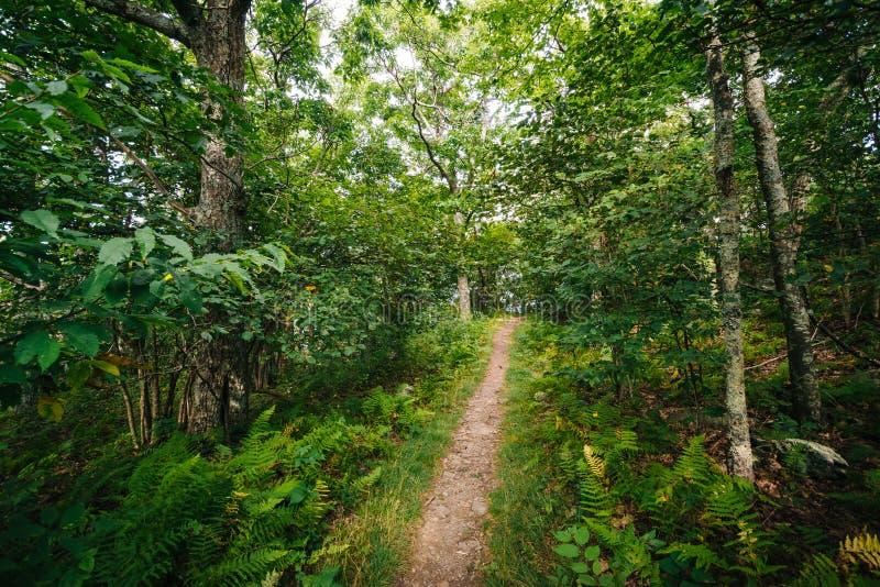 Traînez par une forêt, en parc national de Shenandoah, la Virginie photo stock