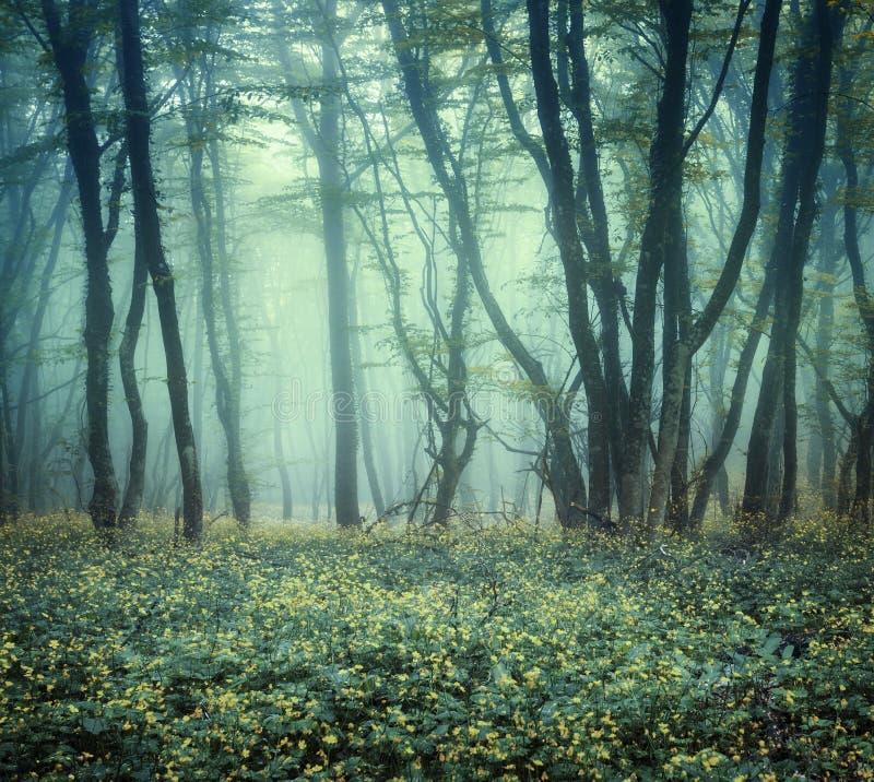 Traînez par une forêt foncée mystérieuse en brouillard images stock