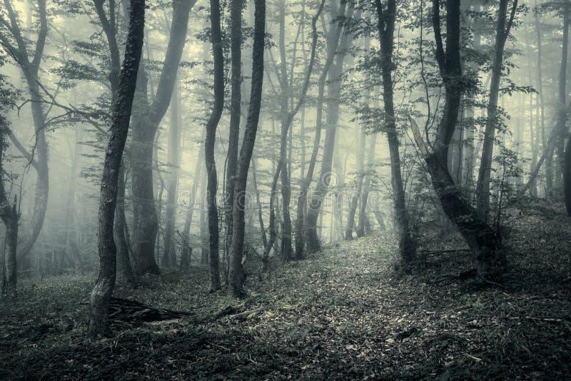 Traînez par une forêt foncée mystérieuse en brouillard photo libre de droits