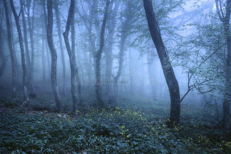 Traînez par une forêt foncée mystérieuse en brouillard photos stock