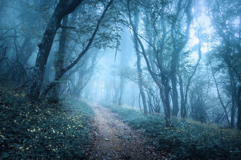 Traînez par une forêt foncée mystérieuse en brouillard image stock