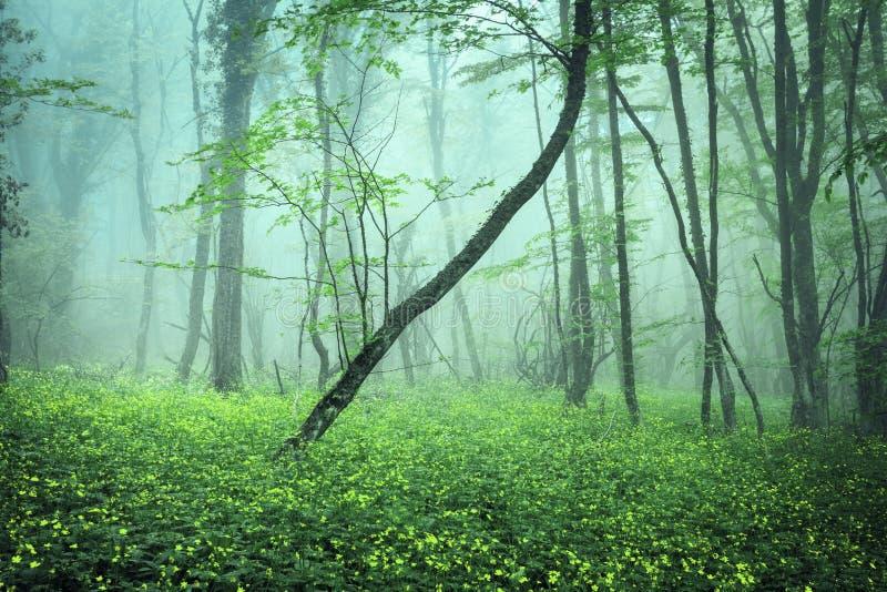 Traînez par une forêt foncée mystérieuse en brouillard photos libres de droits