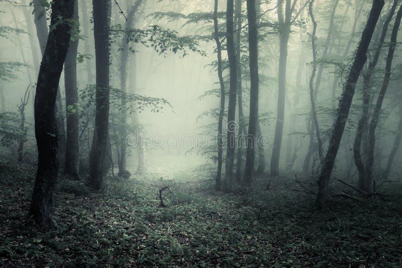 Traînez par une forêt foncée mystérieuse en brouillard avec les feuilles vertes image stock