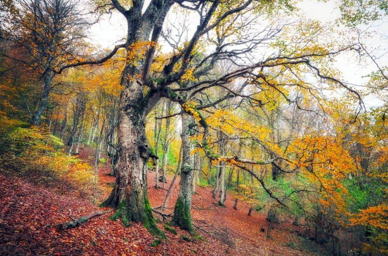 Traînez par une vieille forêt foncée mystérieuse en brouillard photographie stock