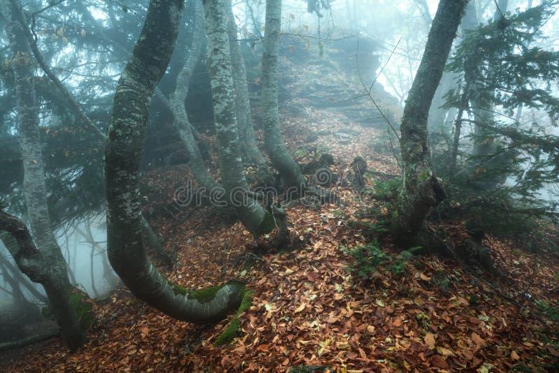 Traînez par une vieille forêt foncée mystérieuse en brouillard Automne image libre de droits