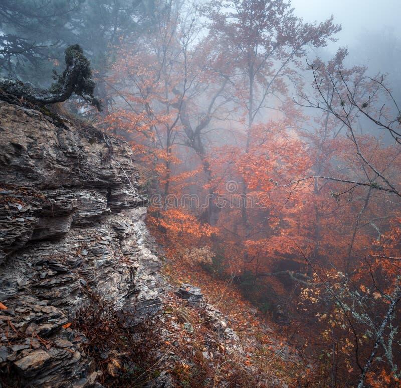 Traînez par une vieille forêt foncée mystérieuse en brouillard Automne images stock