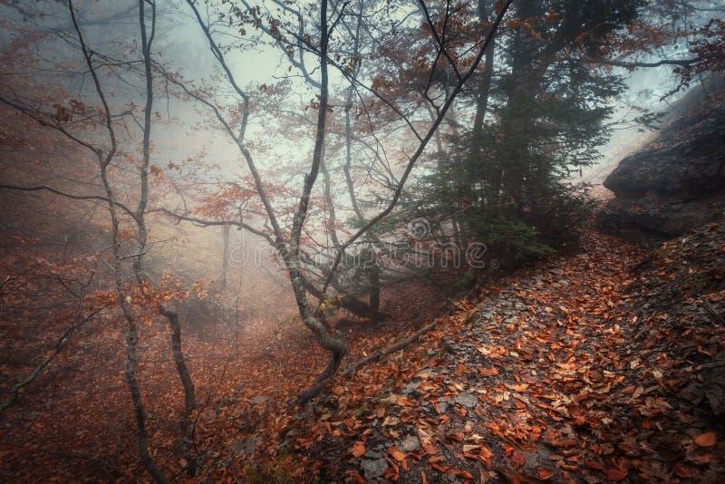 Traînez par une vieille forêt foncée mystérieuse en brouillard Automne photos libres de droits