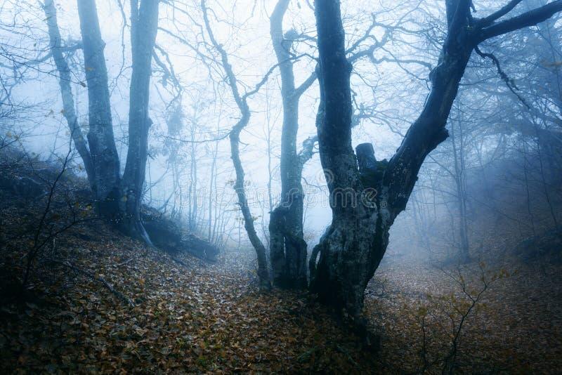 Traînez par une vieille forêt foncée mystérieuse en brouillard Automne photo stock