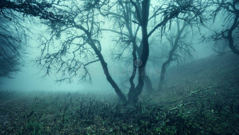 Traînez par une vieille forêt foncée mystérieuse en brouillard Automne photographie stock