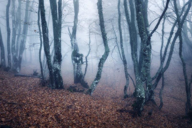 Traînez par une vieille forêt foncée mystérieuse en brouillard Automne image stock
