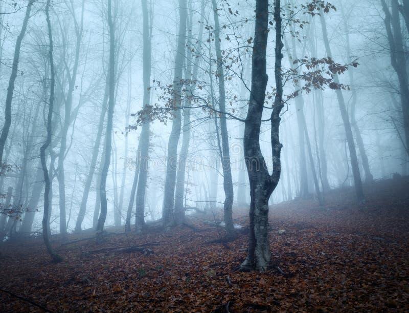 Traînez par une vieille forêt foncée mystérieuse en brouillard Automne photo libre de droits