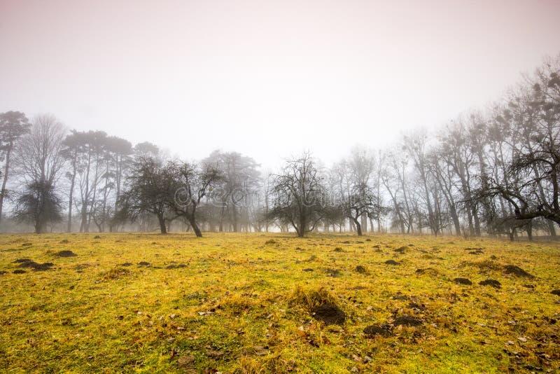 Traînez par une vieille forêt foncée mystérieuse en brouillard Matin d'automne photographie stock libre de droits