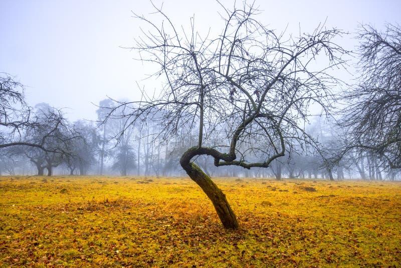 Traînez par une vieille forêt foncée mystérieuse en brouillard Matin d'automne photo libre de droits