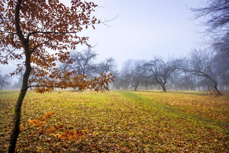 Traînez par une vieille forêt foncée mystérieuse en brouillard Matin d'automne image stock